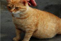 mengobati kucing kembung