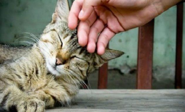 fakta unik tentang kucing