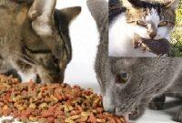 makanan kucing murah