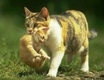 4 Alasan Kenapa Induk Kucing Memindahkan Anaknya dan Cara Mencegahnya