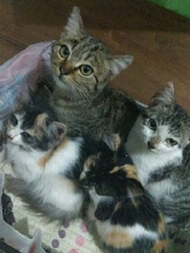 gambar kucing imut