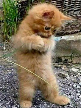 Download 101+  Gambar Kucing Imut Gemesin Paling Lucu