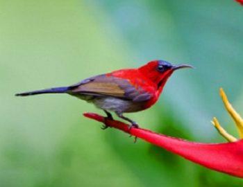 makanan untuk burung kolibri