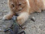 gambar kucing30
