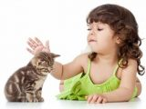 bahaya bulu kucing